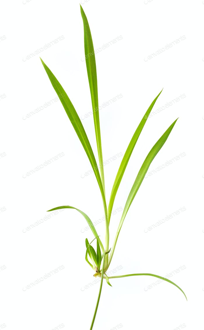 fresh green tropical leaf