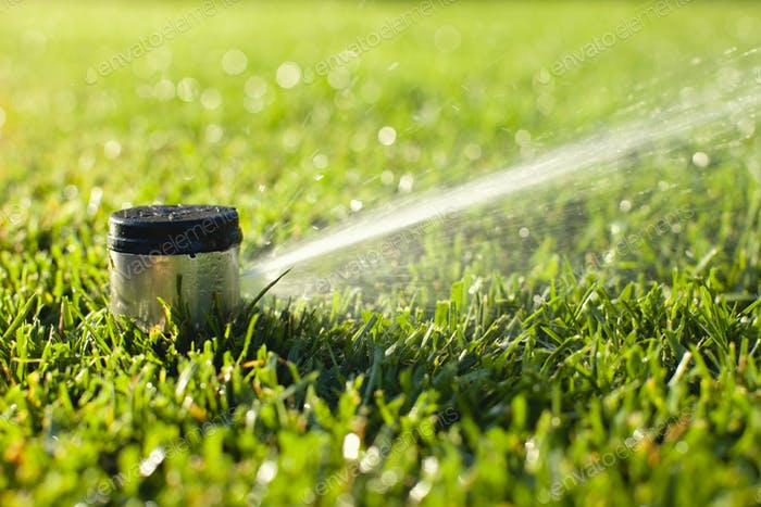 Underground Sprinkler Head Spraying Grass in Morning Sunlight