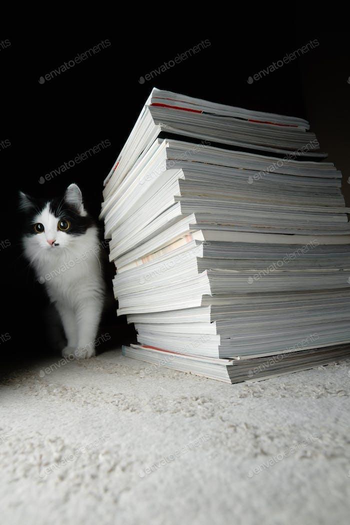 Gatito y una pila de revistas