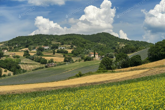 Rural landscape at summer near Gubbio, Italy