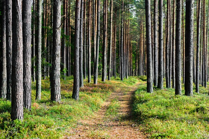 Hiking trails in forest, Estonia