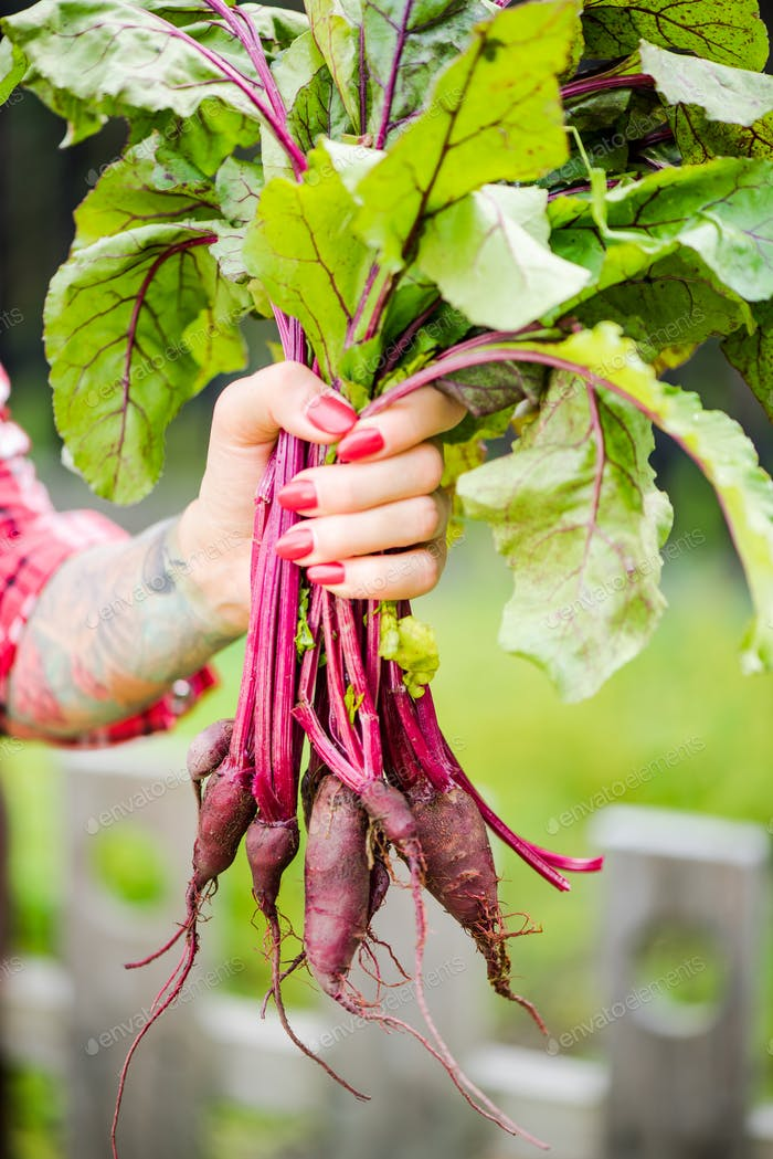 Tattooed millennials woman holding beetroot in garden
