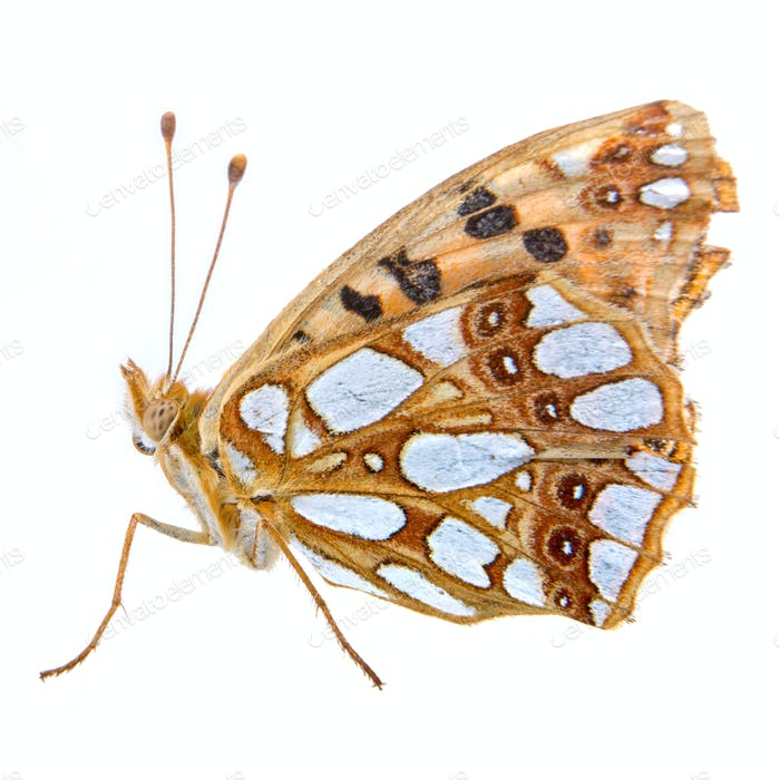 Colored butterfly on the white background