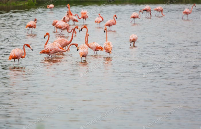 Flamingo in Mexiko