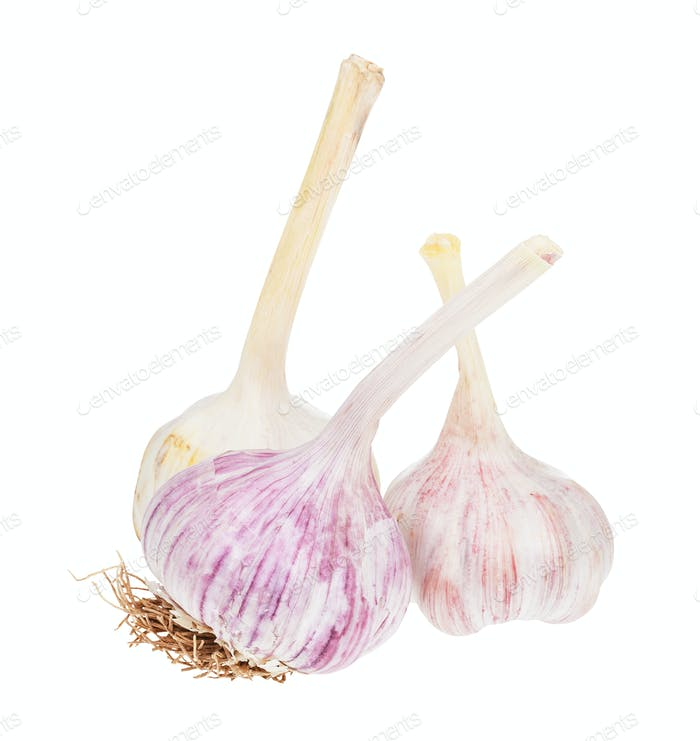 three bulbs of fresh garlic vegetable isolated