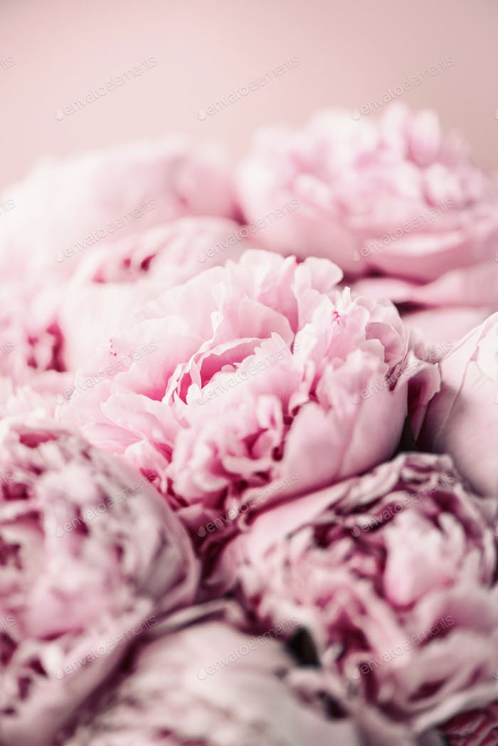 Pink peony flower on pastel background. Copy space. Floral composition. Wedding, birthday