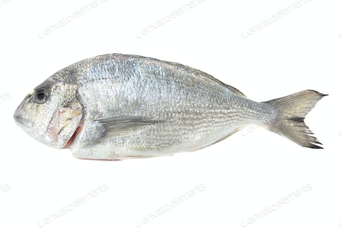 Dorada seafood isolated on white background. Also known as bream sea fish. Raw food.
