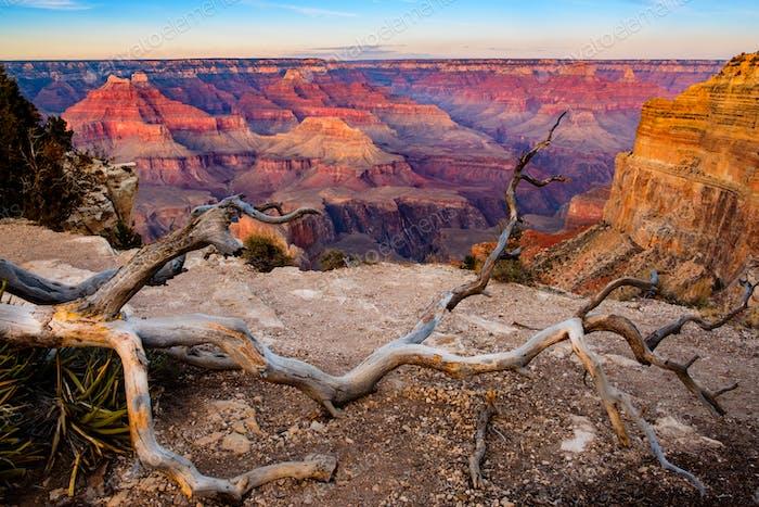Grand Canyon Sonnenuntergang Landschaft mit trockenem Baum Vordergrund, USA