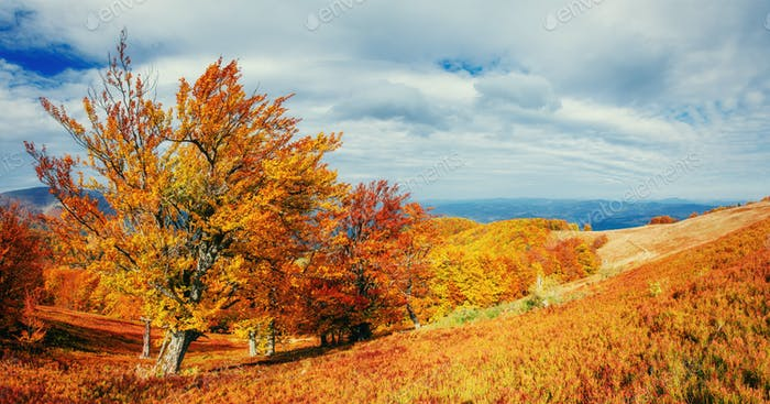 Autumn Landscape with a tree, colorful season, falling leaves