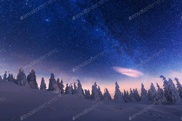 Wintry scene with snowy trees