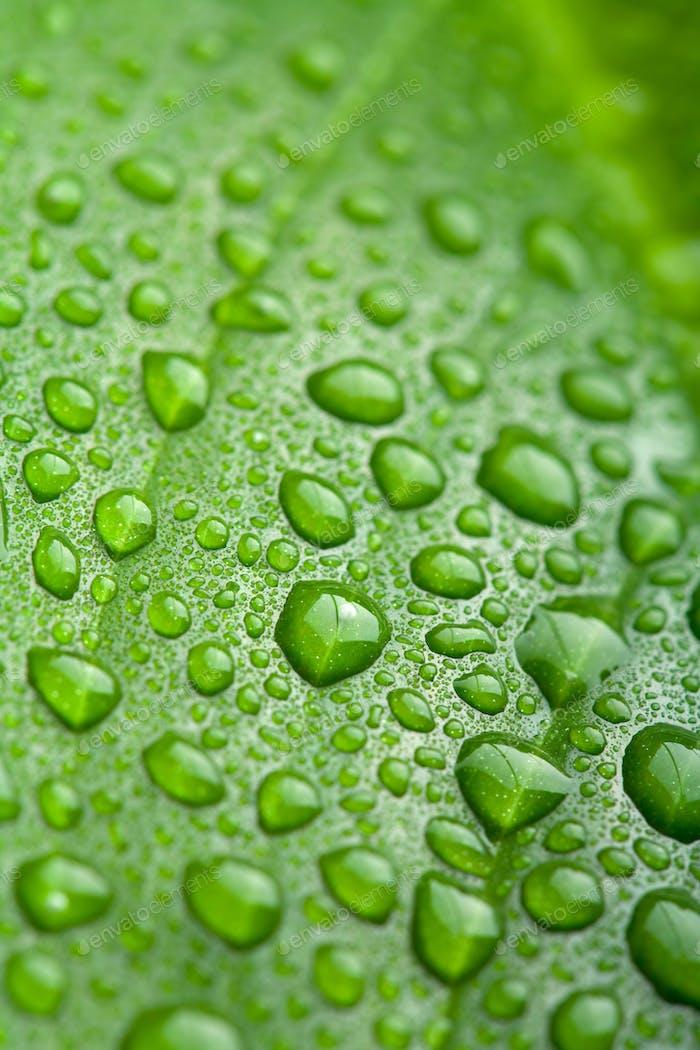 frisches grünes Blatt mit Wassertropfen