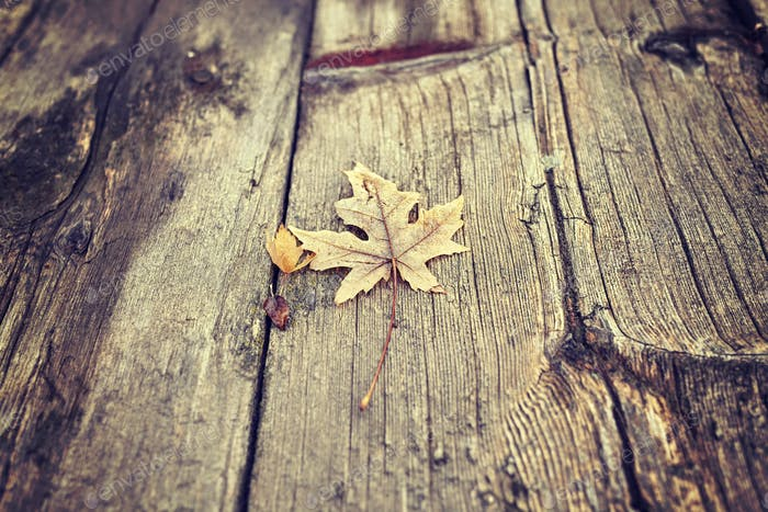 Color toned dry leaf on a grunge wooden floor, natural backgroun