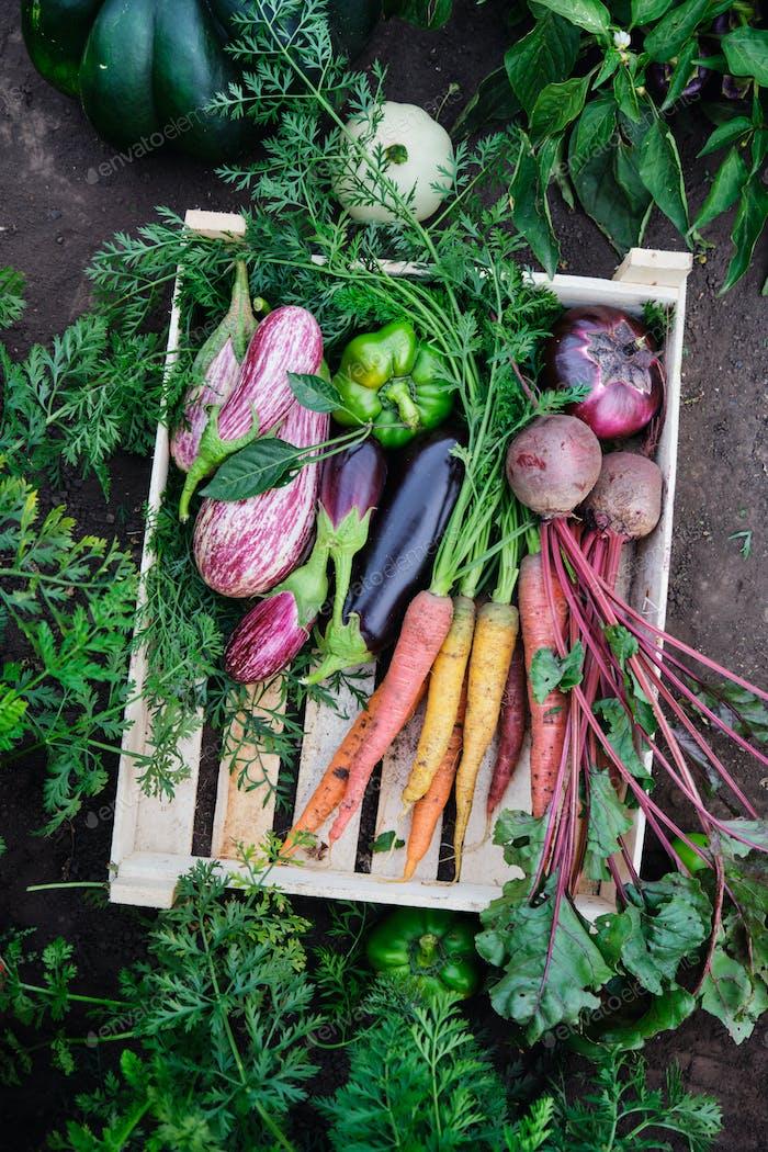 Verschiedene Bio-Gemüse in einer Holzkiste