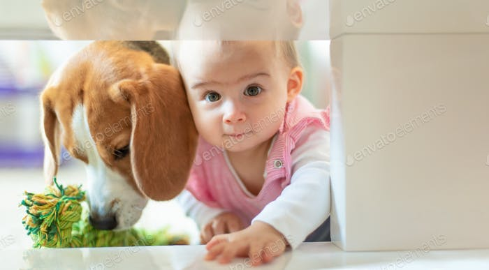 Little baby girl with her dog crawl into tight space under coffee table