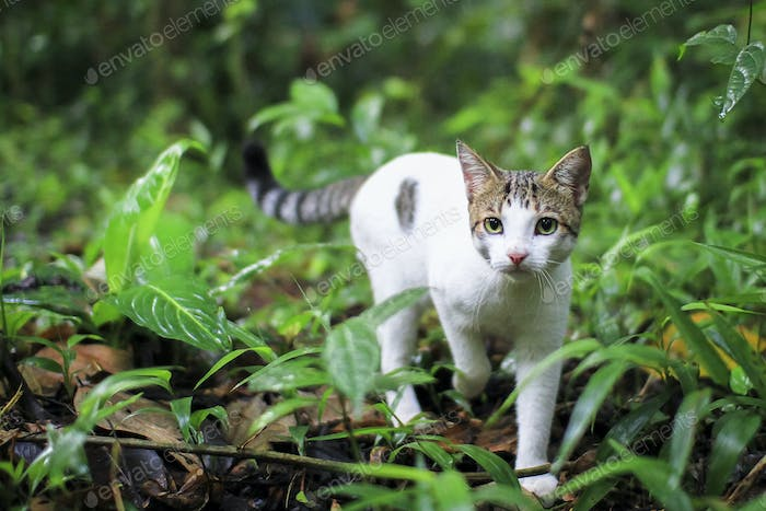 White Cat Walking in the Forest