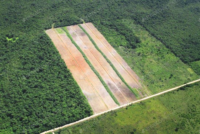 Aéreo de la selva tropical Clearcut en Belice