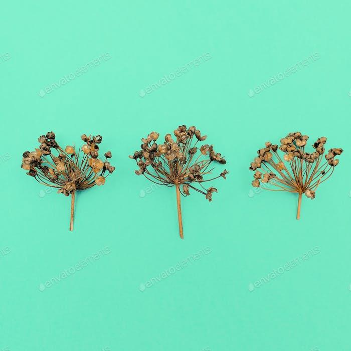 Dried herbs Herbarium Minimal style