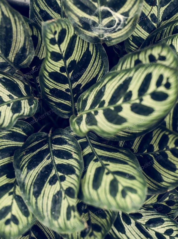 Nahaufnahme Bild der Blätter