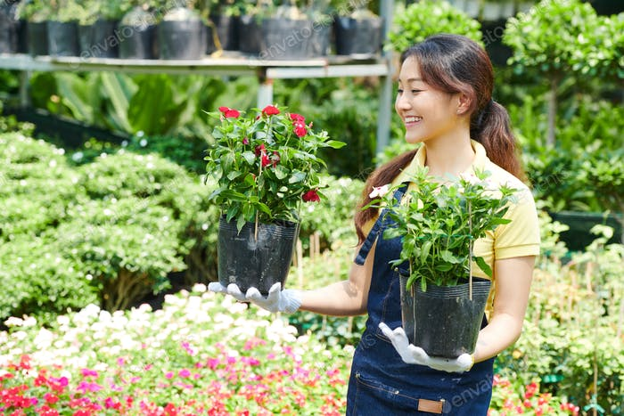 Potted plants for customer