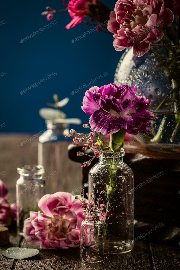 Schöne lila Nelke in Glasvase