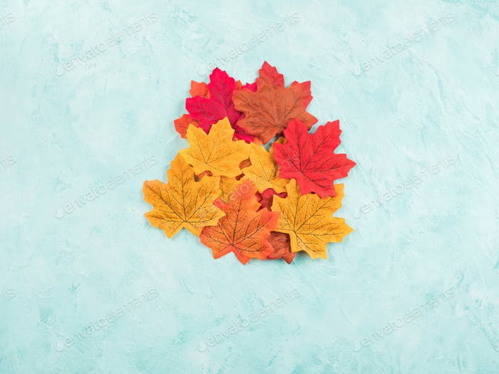 Red and yellow autumn maple leaves on turquoise background. Seasonal background