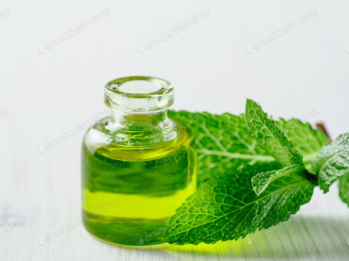 Melissa or mint oil with green leaves