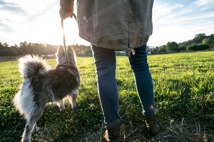 Unrecognizable young woman with dog in green sunny nature