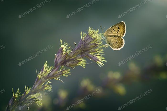 Butterflies Sitting on a Flower. Macro Photo Shoot