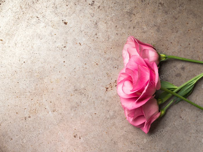 Pink flowers on grunge background