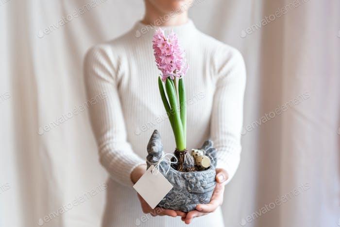 Woman holding  hyacinthus orientalis in flower pot.
