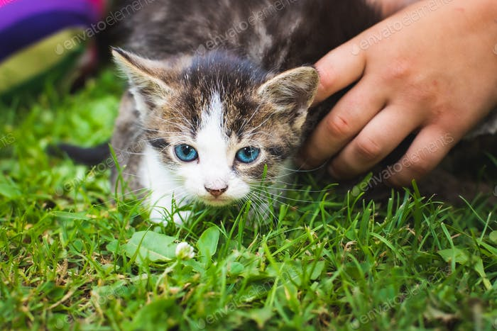 Adorable kitten outdoors on green grass playing with children