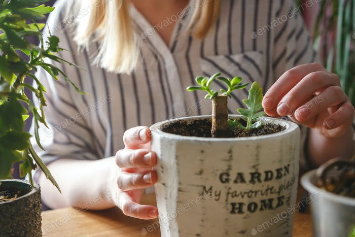 Gardening home. Garden home,Girl replanting green pasture in home garden.indoor garden,room with