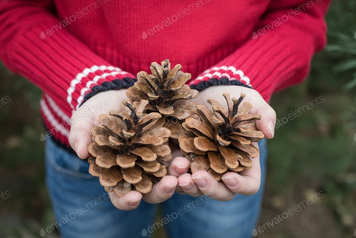 Fir cones in the hands of teenager.