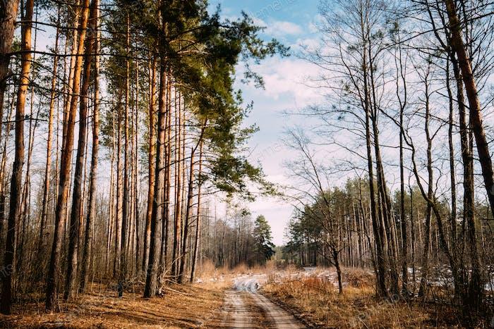 Road Path Walkway Durch Wald. Niemand. Frühfrühling oder späte A