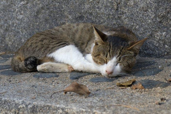 Schlafgasse Katze auf der Straße