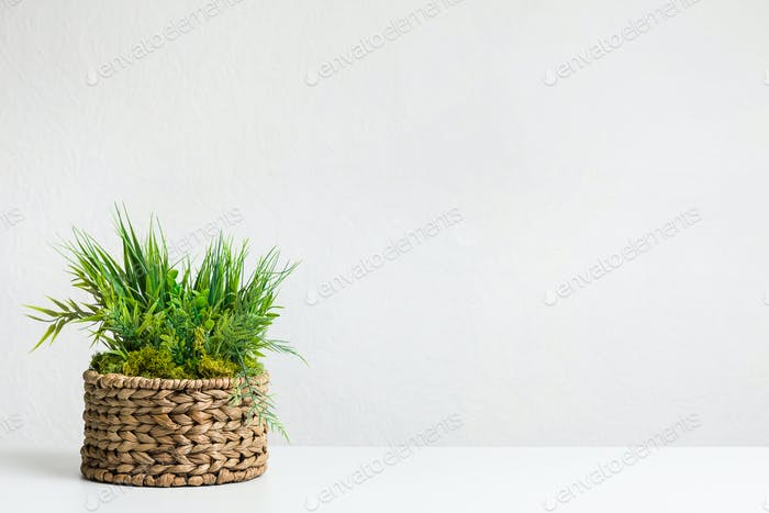 Grassy plant in diy wicker flowerpot over grey wall