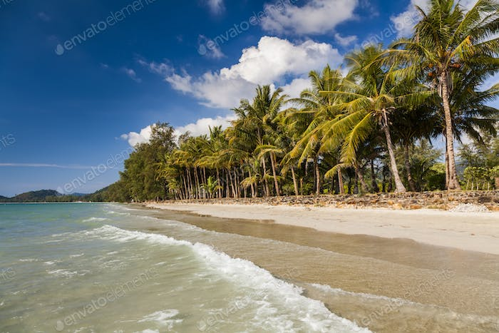 Tropical landscape with coconut palms and sandy beach. Koh Chang