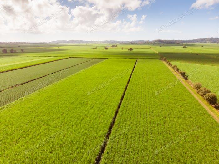 Australische Zuckerrohrfelder und Landschaft