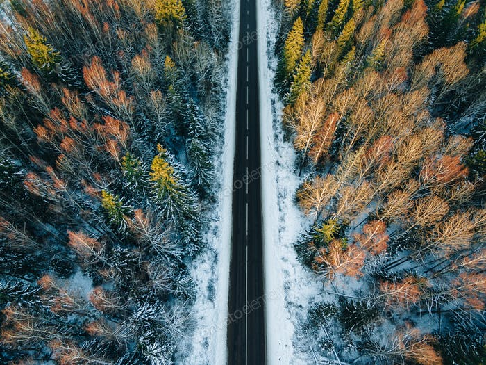 Aerial view of snow covered trees in forest and winter country empty road