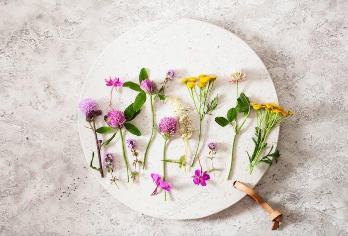 medical flowers herbs, alternative medicine. clover milfoil tans