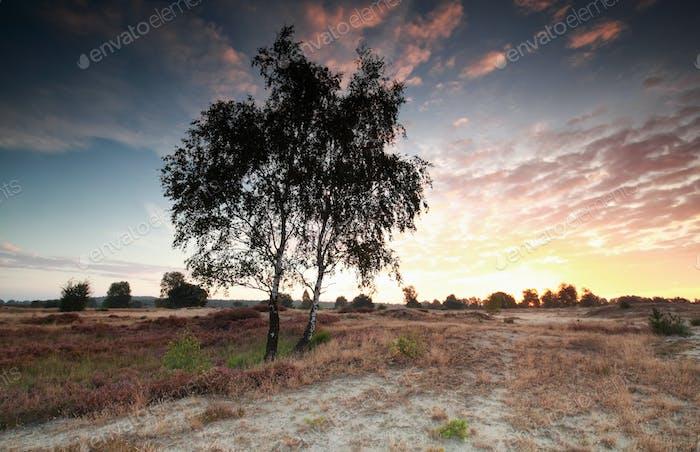 purple sunrise over sand dune and heathland
