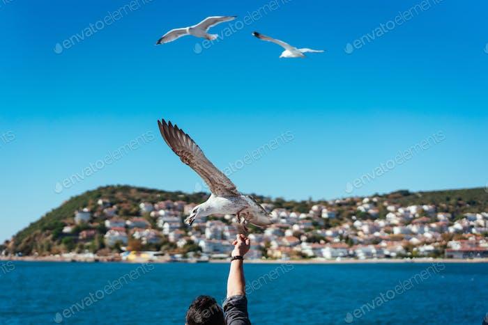 The male hand feeds the sea gulls