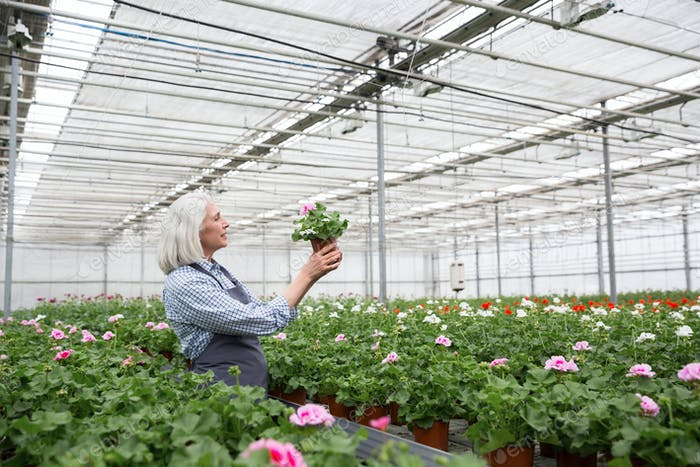 Cheerful mature woman standing in greenhouse near plants