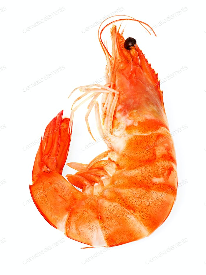 Thumbnail for fresh shrimp isolated