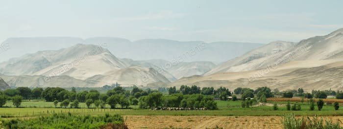 Lluta Valley landscape