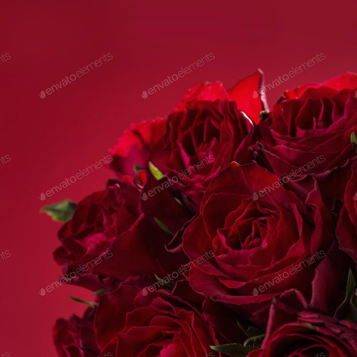 Roses on a red