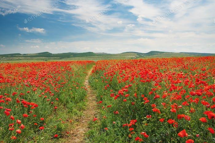 Footpath to sun and meadow of poppies.