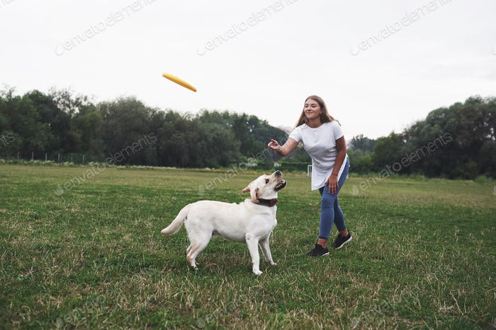 Young woman playing with her labrador in a park. She is throws the yellow frisbee disc. Dog tries to