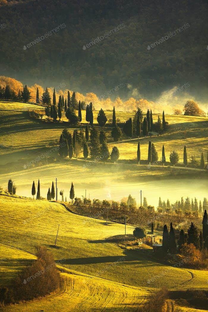 Tuscany foggy morning, farmland and cypress trees. Italy.