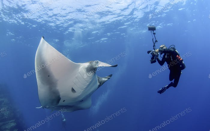 Fotograf fängt Unterwasserbild von Pacific Manta (Manta hamiltoni)